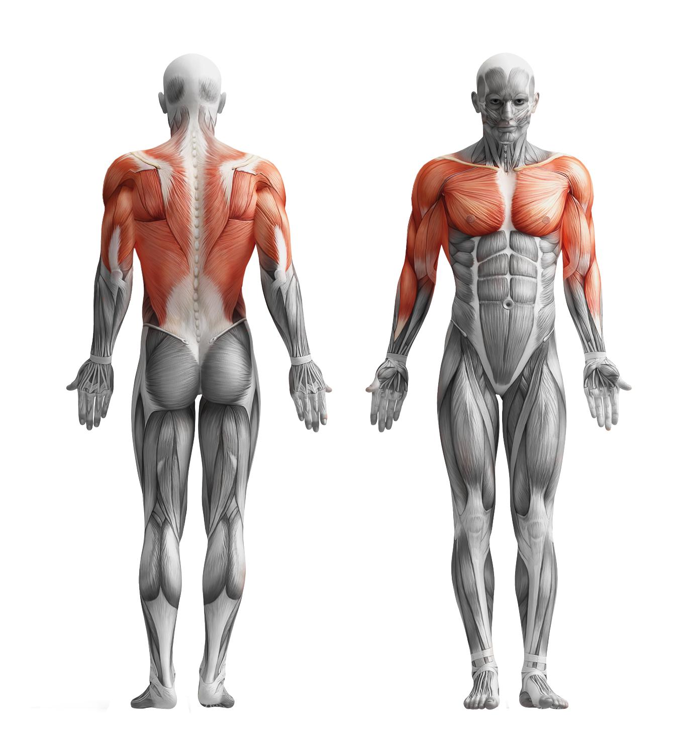 Schildkröt-Fitness: HAND GRIP